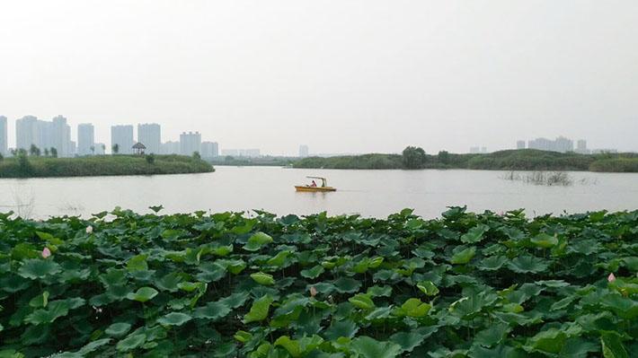 车游湿地公园.jpg